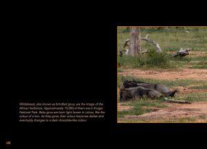 http://travelandpix.com/wp-content/uploads/2020/07/Makutsi-Page-103-1024px-Output-300x216.jpg