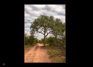 http://travelandpix.com/wp-content/uploads/2020/07/Makutsi-Page-123-1024px-Output-300x216.jpg
