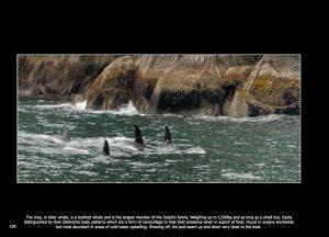 http://travelandpix.com/wp-content/uploads/2020/08/North-Pacific-Passage-103-300x216.jpg