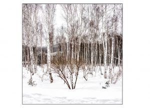 http://travelandpix.com/wp-content/uploads/2021/07/Harbin-Ice-and-Snow-Page-66-L-300x216.jpg