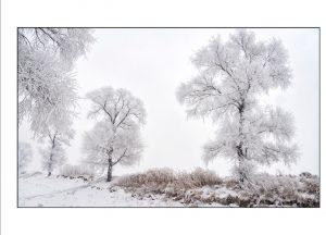 http://travelandpix.com/wp-content/uploads/2021/07/Harbin-Ice-and-Snow-Page-87-R-300x216.jpg