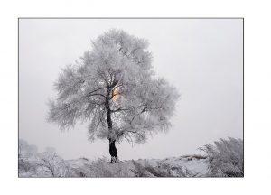 http://travelandpix.com/wp-content/uploads/2021/07/Harbin-Ice-and-Snow-Page-92-L-300x216.jpg