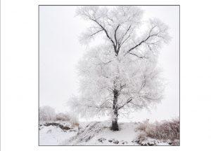http://travelandpix.com/wp-content/uploads/2021/07/Harbin-Ice-and-Snow-Page-93-R-300x216.jpg