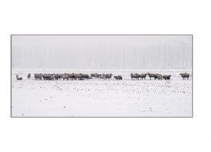 http://travelandpix.com/wp-content/uploads/2021/07/Harbin-Ice-and-Snow-Page-98-L-300x216.jpg