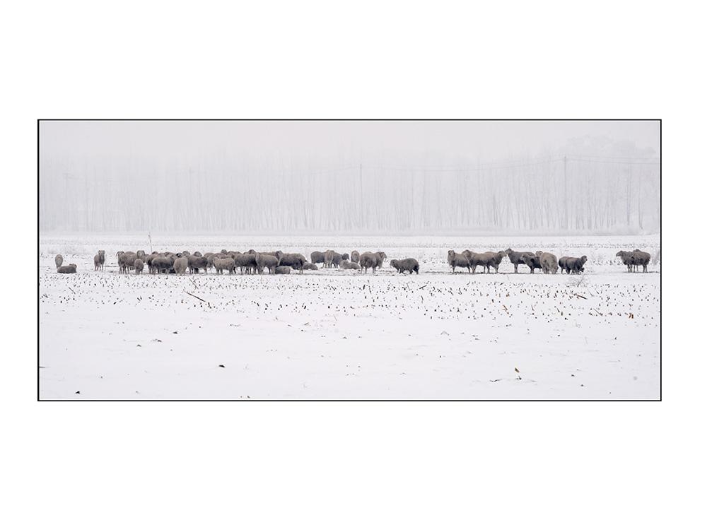 http://travelandpix.com/wp-content/uploads/2021/07/Harbin-Ice-and-Snow-Page-98-L.jpg